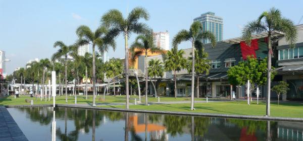 High Street palms